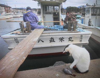 漁師さんとネコ
