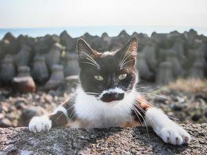 ネコ 1匹