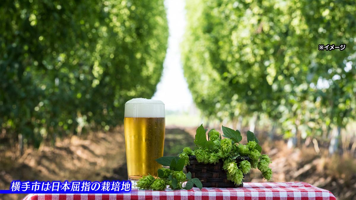 横手産ホップ「IBUKI」を使った クラフトビールとりんごの発泡酒をご紹介!