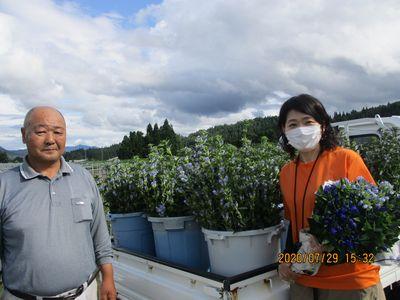 霊峰鳥海山で育まれる花「鳥海りんどう」