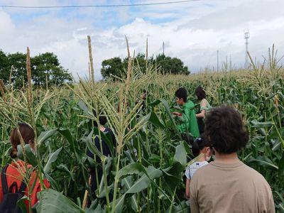 収穫体験②