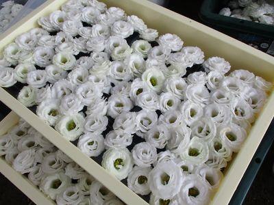 作業した花