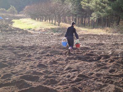 堆肥を入れる