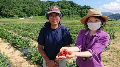 【ふるさとACTION】湯沢市 露地栽培のいちご